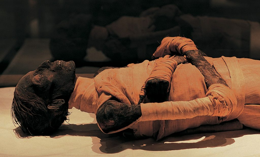 "Mummy of Thutmosis IV (Died in 1387 BC) (found in the Valley of the Kings and discovered by V. Loret (1898), displayed at Egyptian Museum in Cairo. ""At the Cairo Museum, there are five or six other mummies which have the same characteristics. ""It's the second time that one claims to have discovered Nefertiti in the same group of mummies."""